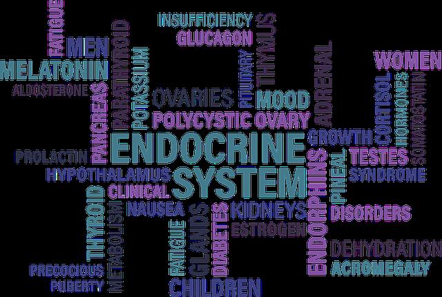 Dieta sistema endocrino