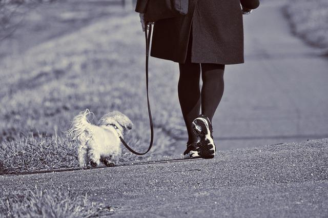 Adelgazar con perros